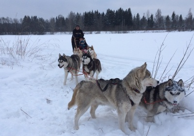 Dog sledding with adventerous huskies