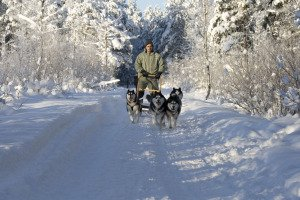 Join in the thrillof meeting friendly husky dogs and experiencing winter fun on a dog sled ride at a local Siberian Husky Farm near Tallinn.